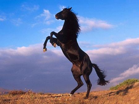 Mơ thấy ngựa
