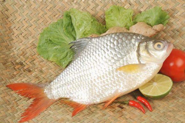 Mơ thấy cá mè